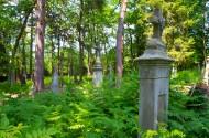 Cmentarz w Lacku