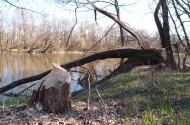 Rzeka Bug w Różance